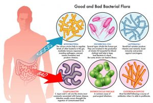 Probiotics – What are They and Should You Take Them?